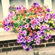 House window with colorful petunias — Stock Photo #68355889