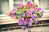 House window with colorful petunias — Stock Photo