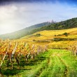 Landscape with autumn vineyards — Stock Photo #70392767