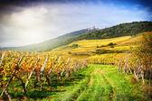 Landschap met najaar wijngaarden — Stockfoto