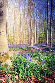 Beautiful bluebells in spring forest — Stock Photo
