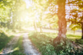 Nature background with forest path — Stock Photo