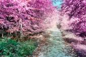 Purple infrared forest landscape — Stock Photo