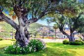 Idade das oliveiras no parque da cidade de verão — Fotografia Stock