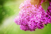 Beautiful spring lilac flowers on the green background, outdoors — Stock Photo