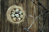 Eggs in a nest with branches on a wooden table — Stock Photo