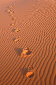 Footsteps in the Sahara Desert — Foto de Stock