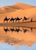Camel Caravan in Sahara Desert — Stock Photo