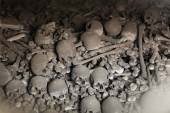 Human bones and skulls — Stock Photo