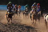 Velka Pardubicka Steeplechase in Pardubice — Stock Photo