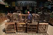 Bird Market in Yogyakarta, Central Java — Stock Photo