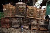 Vendor sells song birds and parrots — Стоковое фото