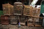 Vendor sells song birds and parrots — Zdjęcie stockowe
