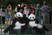 Two giant pandas (Ailuropoda melanoleuca) — Stock Photo