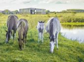 Group of Horses Eating Grass — Stock Photo