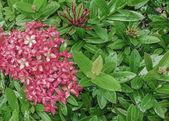 Flowers and Plants Detail — Foto de Stock