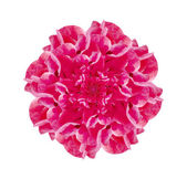 Isolated Pink Flower Decorative Ornament — Stock Photo
