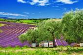 Lavander fields and beehive in Provence, France — Stock fotografie