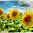 Sunflowers - artistic picture in painting style — Stock Photo #55447651