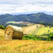 Постер, плакат: Pictorial rural landscapes of Tuscany Italy