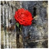 Red rose in old door, artistic picture — Stockfoto