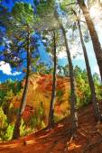 Forest and rocks of natural ochre in Roussillon, Provence, Franc — Stock Photo