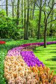 Beautiful floral Keukenhof park in Holland — Stock Photo