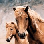 Horse — Stock Photo #55925887