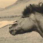 Horse — Stock Photo #68860903