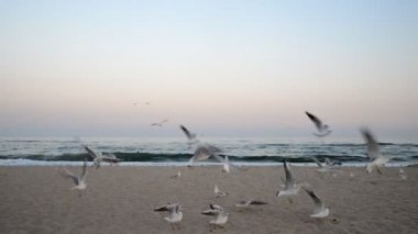 Seagulls flying on a beach — Stock Video