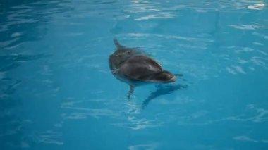 Dolphin are swiming in the aquarium — Stock Video