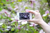 Frau nehmen Foto mit Handy — Stockfoto