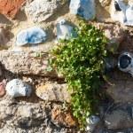 Weed growing through a garden wall — Stock Photo #67842903