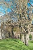Tress in early spring — Foto de Stock