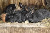 Rabbits in rabbit hutch — Stock Photo