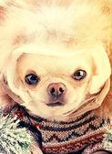 Funny cute dog — Foto de Stock