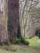 Way of trees — Стоковое фото