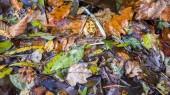 Colorful autumn leaves — Стоковое фото
