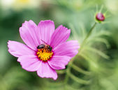 Bee perched on a flower — Stock Photo