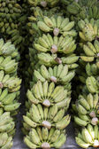 Green Cultivated Banana kind of fruit from asian. — Zdjęcie stockowe