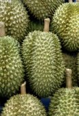 Durian fresh fruit,sweet from East asian,Thailand, Malaysia. — Zdjęcie stockowe