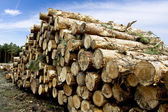 Lumber in the Forest - Wood — Stock Photo