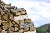 Firewood in Nature - Wood — Stock Photo