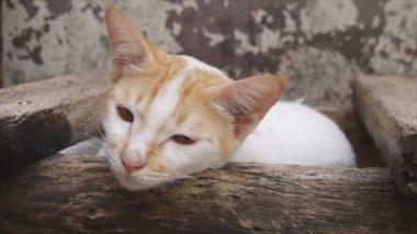 Cat lying on log — Stock Video