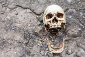 Human skull ,separated jaw, on crack cement street  — Stock Photo