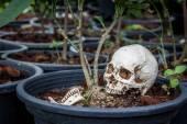 Small human skull on flower pot — Stock Photo