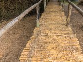 Bamboo bridge with clump of bambusa bamboo — Stock Photo