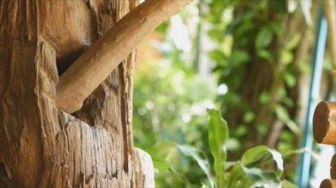 Hoopoe bird feeding it's baby in nest — Stock Video