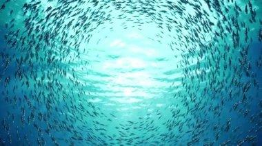 School of fish — Stock Video
