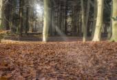Forest light beam — Stock Photo